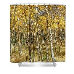 Colorado Gold Shower Curtain
