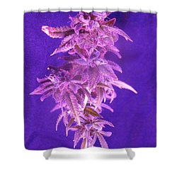 Colorado Rocksy Shower Curtain