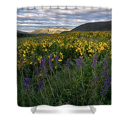 Colorado Wildflower Sunrise Shower Curtain by Aaron Spong