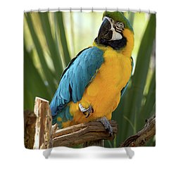 Colorful And Smart Shower Curtain