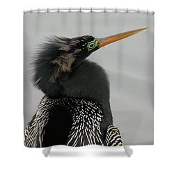 Colorful Anhinga Shower Curtain by Rosalie Scanlon