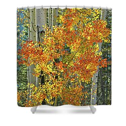 Colorful Aspen Along Million Dollar Highway Shower Curtain