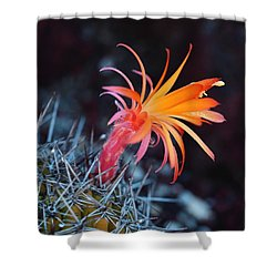 Colorful Cactus Flower Shower Curtain by Rona Black