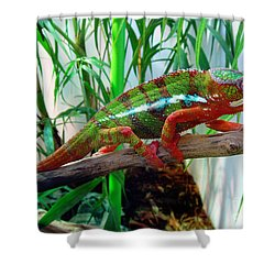 Colorful Chameleon Shower Curtain by Nancy Mueller
