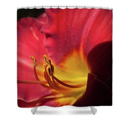Shower Curtain featuring the photograph Colorful Cobras by David Coblitz