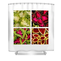 Colorful Coleus Shower Curtain by Art Block Collections