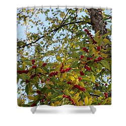 Colorful Contrasts Shower Curtain by Deborah  Crew-Johnson