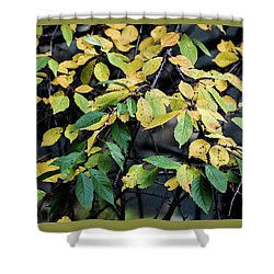 Colorful Fountain -  Shower Curtain