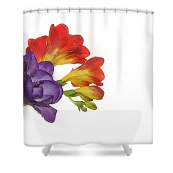 Colorful Freesias Shower Curtain by Elvira Ladocki
