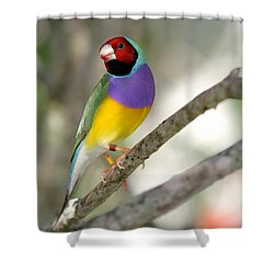 Colorful Gouldian Finch Shower Curtain