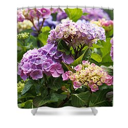 Colorful Hydrangea Blossoms Shower Curtain