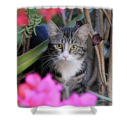 Colorful Kitty Shower Curtain