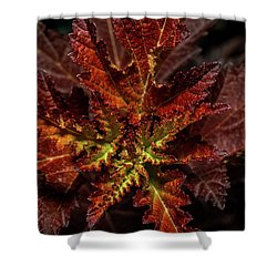 Shower Curtain featuring the photograph Colorful Leaves by Paul Freidlund