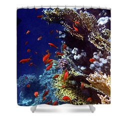 Colorful Lyretail Anthias Shower Curtain