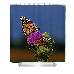Shower Curtain featuring the photograph Colorful Monarch by Sandy Keeton