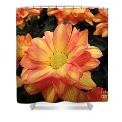 Shower Curtain featuring the photograph Colorful Mums by Ray Shrewsberry