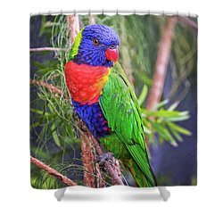 Colorful Parakeet Shower Curtain by Stephanie Hayes