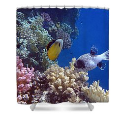 Colorful Red Sea Fish And Corals Shower Curtain