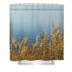 Colorful Reeds Shower Curtain by Kennerth and Birgitta Kullman