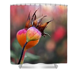 Colorful Rose Hips Shower Curtain by Rona Black