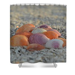 Shower Curtain featuring the photograph Colorful Scallop Shells by Melanie Moraga