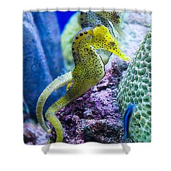 Colorful Seahorses Shower Curtain