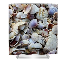 Colorful Shells Shower Curtain
