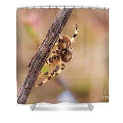 Colorful Spider Hanging From The Stick  Shower Curtain