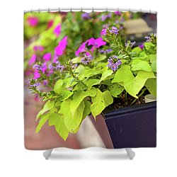 Colorful Summer Flowers In Window Box Shower Curtain