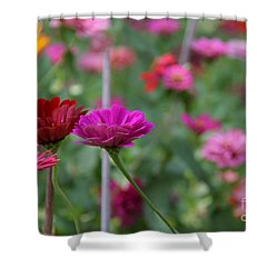 Colorful Summer Shower Curtain