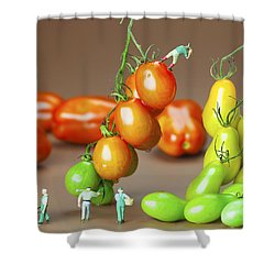 Shower Curtain featuring the photograph Colorful Tomato Harvest Little People On Food by Paul Ge