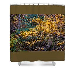 Colorful Trees Along The Creek Bank Shower Curtain