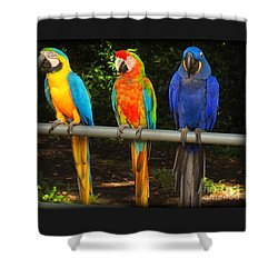 Colorful Trio Shower Curtain
