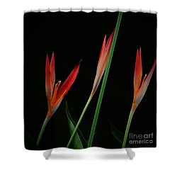 Colorful Trio Shower Curtain by Pamela Blizzard