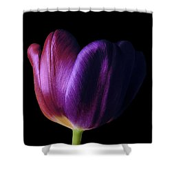 Colorful Tulip Macro Shower Curtain