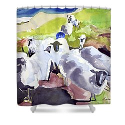 Colorful Waiting Sheep Shower Curtain