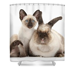 Colorpoint Rabbit And Siamese Kitten Shower Curtain by Mark Taylor