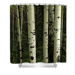 Shower Curtain featuring the photograph Colors And Texture Of A Forest Portrait by James BO Insogna