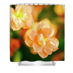 Colorful Dreams Shower Curtain by Dennis Baswell