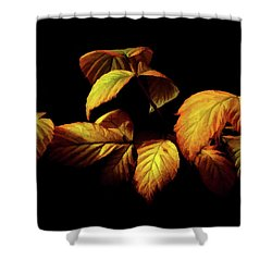 Shower Curtain featuring the painting Colors Of Autumn Memories  by David Dehner