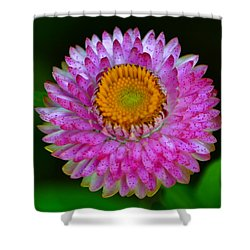 Shower Curtain featuring the photograph Colors Of Nature - Grand Opening 001 by George Bostian