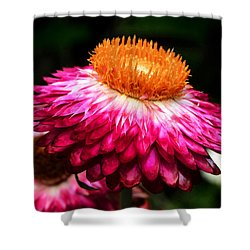 Shower Curtain featuring the photograph Colors Of Nature - Grand Opening 002 by George Bostian