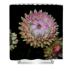 Shower Curtain featuring the photograph Colors Of Nature - Grand Opening Stages 001 by George Bostian