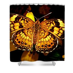 Colors Of Nature - Painted Lady Butterfly 002 Shower Curtain