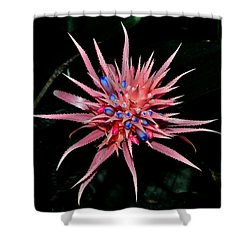 Shower Curtain featuring the photograph Colors Of Nature - Pink And Blue Bromelia by George Bostian