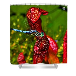 Shower Curtain featuring the photograph Colors Of Nature - Profile Of A Dragonfly 003 by George Bostian