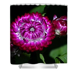 Shower Curtain featuring the photograph Colors Of Nature - Strawflower 005 by George Bostian