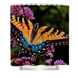 Shower Curtain featuring the photograph Colors Of Nature - Swallowtail Butterfly 004 by George Bostian