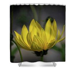 Colour Of Sun Shower Curtain