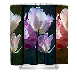 Coloured Tulips Shower Curtain by Robert Meanor